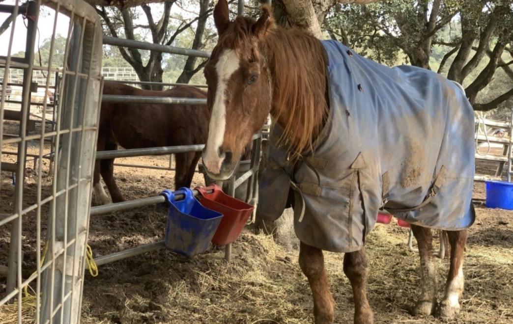 Skippy with fellow horse Brave One. Photos by Robert Eliason.