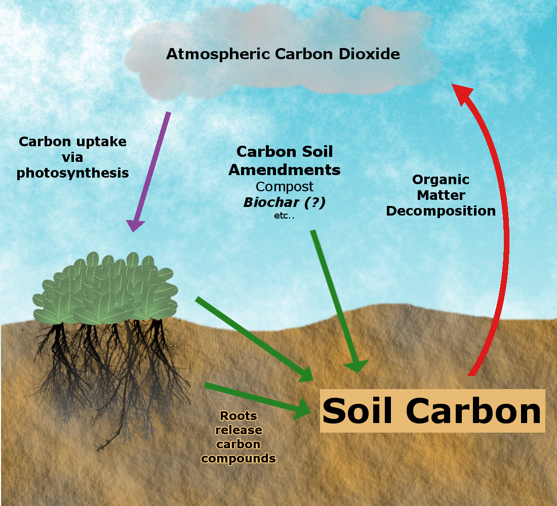 Photo courtesy of University of California. ucanr.edu