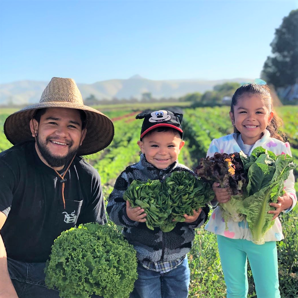 The Granados family harvests lettuce together. Photo courtesy of Royal Greens Family Farm.