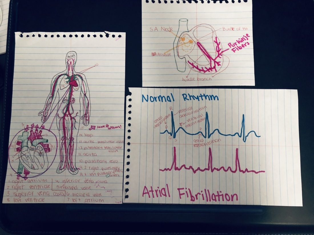 Anatomy homework