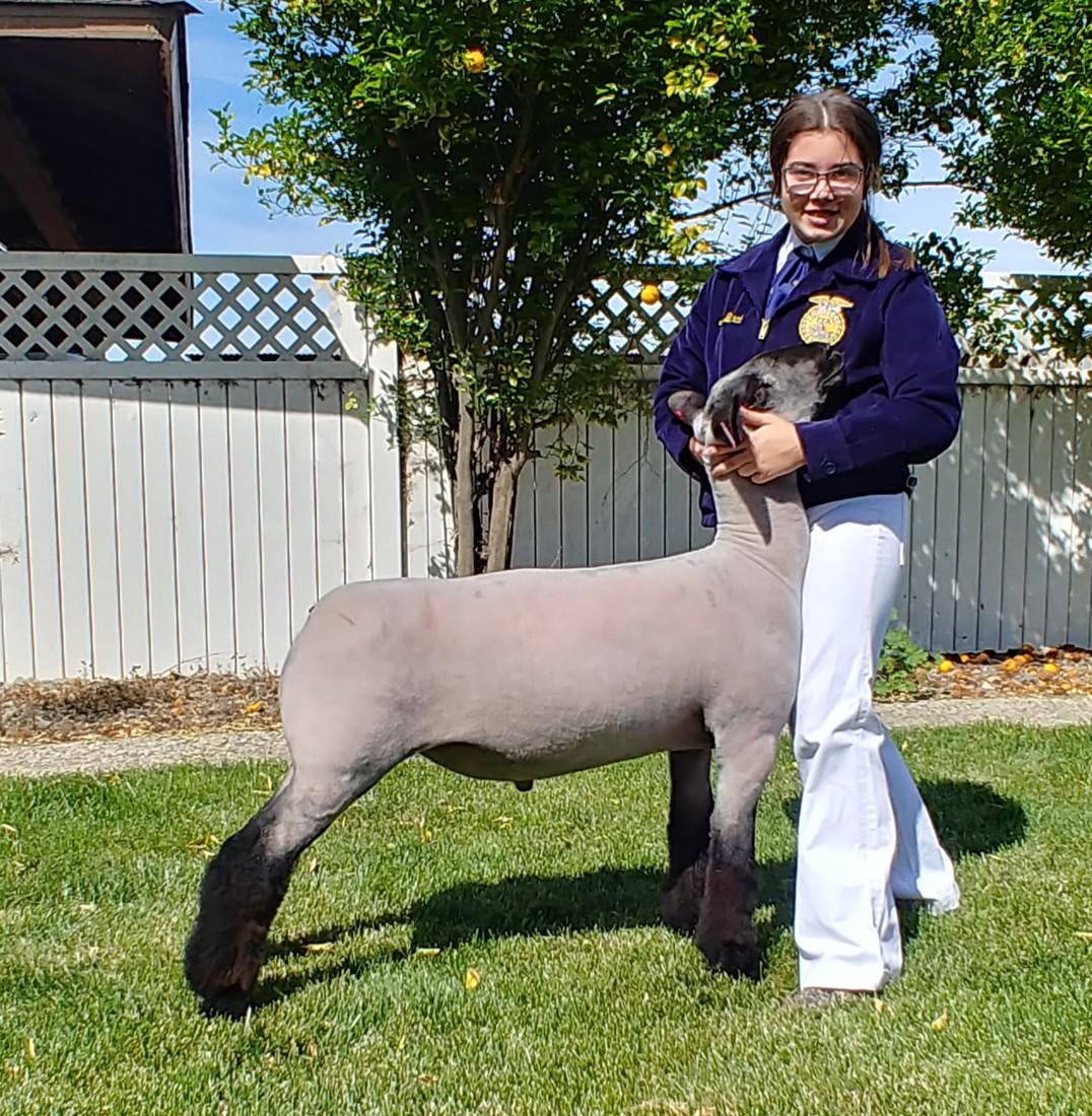 Abby Bianchi bracing her Reserve FFA Champion Market Lamb. Photo provided by Chelsi Faria.