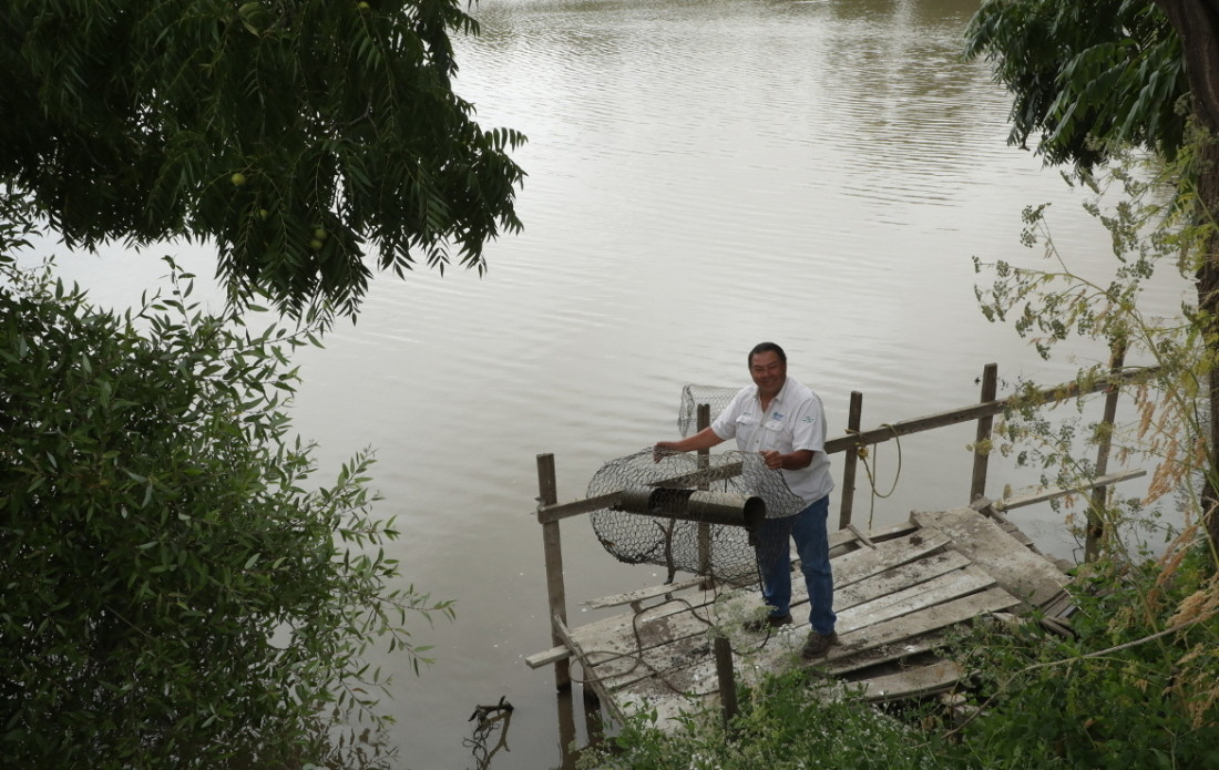 Herman Garcia pulling illegal traps out of the Pajaro River. Photo by Robert Eliason.