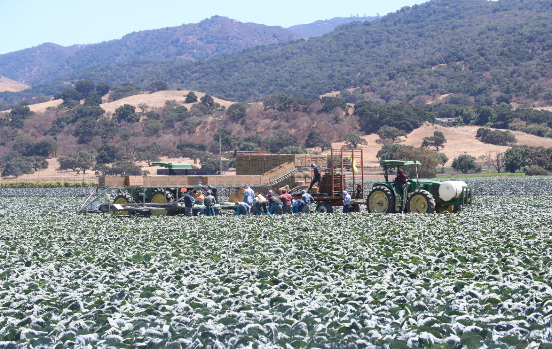Farmworkers in San Juan Bautista. Photo by Robert Eliason.