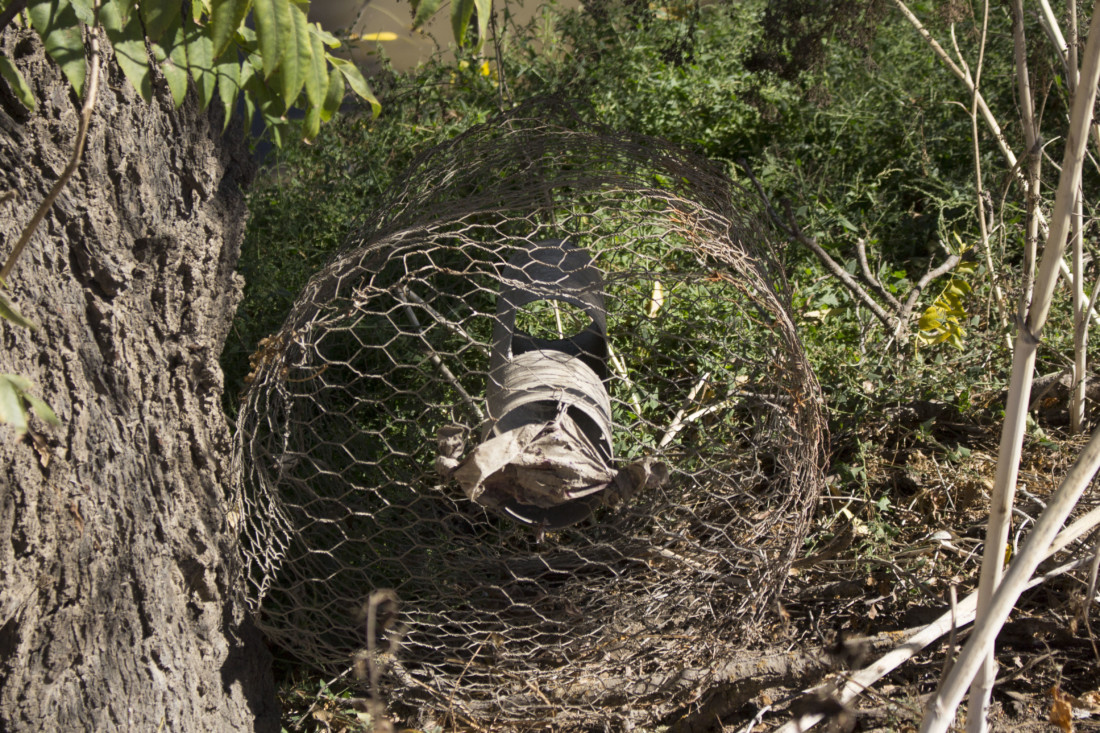 Fish trap pulled out of the Pajaro River. Photo by Noe Magaña.