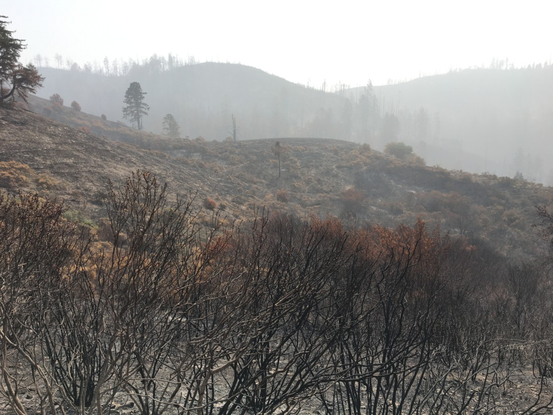 Haze and burned shrubs from the CZU fire. Photo taken on Sept. 14, provided by Devii Rao.