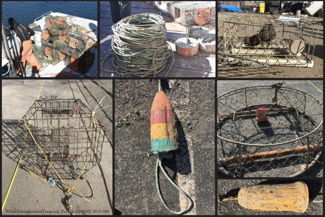 Lost and abandoned fishing gear recovered from the seafloor. Photo courtesy of Marine Life Studies Whale Entanglement Team.