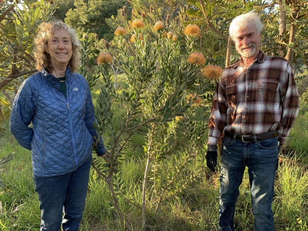 Michelle and Rick McCain by a Leucospermum. Photo by Robert Eliason.