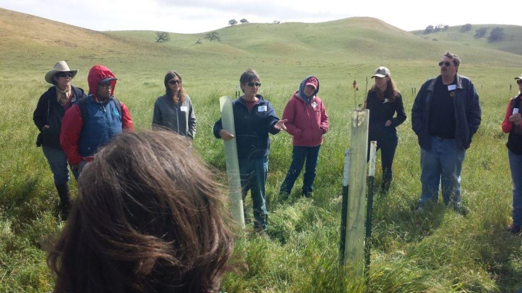 Kathy Spencer speaking at oak restoration tour of Bear Valley Ranch. Photo courtesy of Karminder Brown.