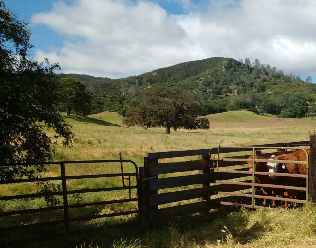 Schmidt Family Bear Valley Ranch. Photo courtesy of Karminder Brown.