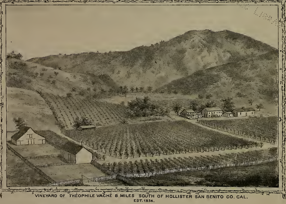 Vaché's Vineyard. From The History of Monterey County, 1881