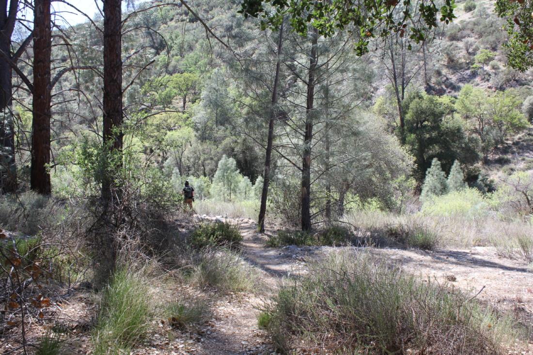 Hiker on Hain Wilderness Trail. Photo by Carmel de Bertaut.