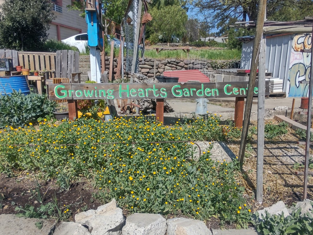 Community Garden. Photo by Carmel de Bertaut.