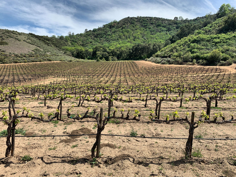 The DeRose Vineyards. Photo by Robert Eliason.
