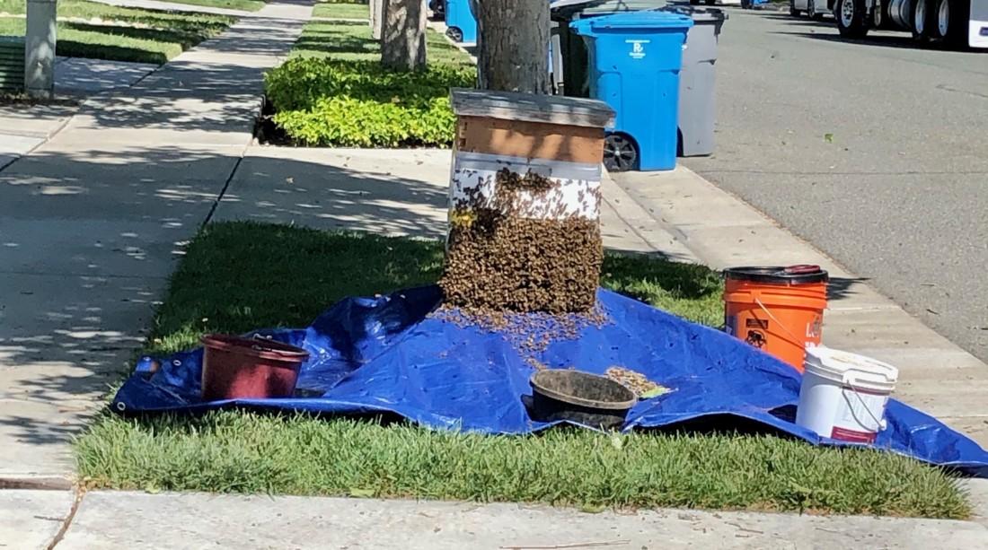 Boxes of bees. Photo courtesy of Wanda Guibert.