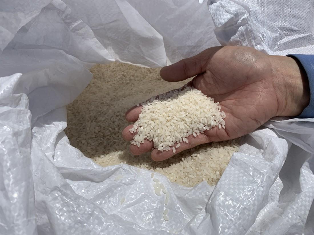 Rice before polishing. Photo by Robert Eliason.