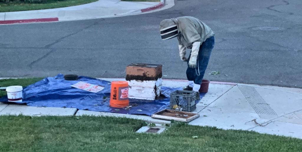 Dan Kerbs collecting bees. Photo courtesy of Iraida Pisano.