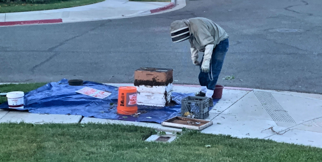 Spring brings flowers and swarms of bees to San Benito County
