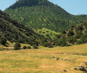 ashurst-ranch. Photo courtesy of Cushman & Wakefield marketing brochure.