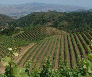 The Jensen Vineyard on Mt Harlan. Courtesy of Calera Wine Company