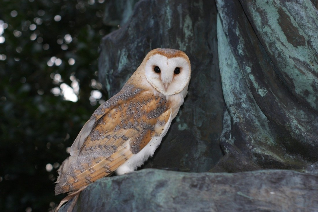 Barn owl boxes installed near San Benito River